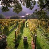 Sharpham Vineyard, Trek and Taste