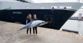 orca-watch