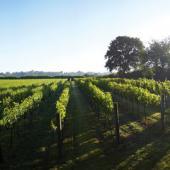 Kent's Vineyards & Breweries