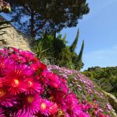 Ventnor Botanic Garden & Tea at The Royal